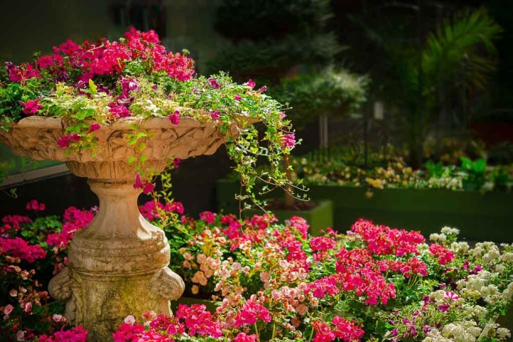 pink flowers and urn | virtual garden tours