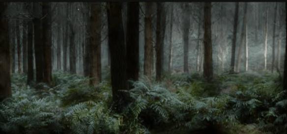 le seigneur des anneaux : la forêt des Elfes