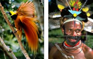 Paradisier et indigène de la Nouvelle Guinée