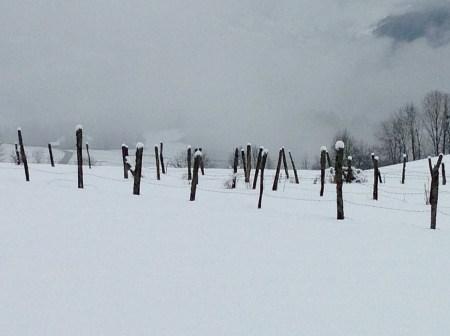 Graphisme d'hiver - col de Leschaux dans les Bauges - photo Enki le 16/02/2014 à 13h 08 (IMG_1610)