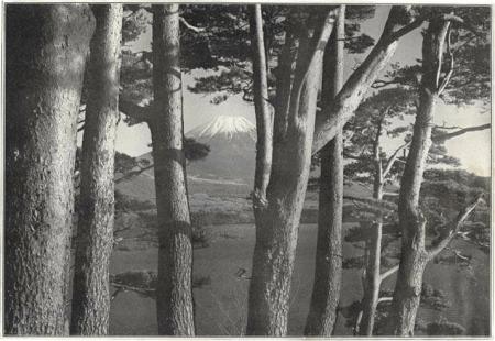 Herbert G. Ponting - le Fuji vu à travers les pins, publié par K. Ogawa en 1905