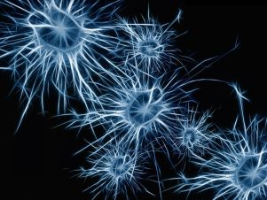 cover-r4x3w1000-58c964784d704-neurons-1773922-1920