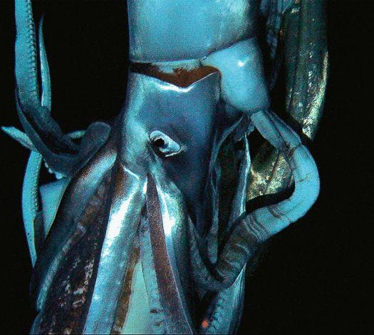 kraken-rencontre-enfin-lieu.jpg