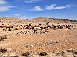 Moses in Desert. best