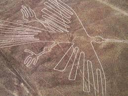 Nazca bird