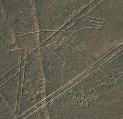 Nazca dog