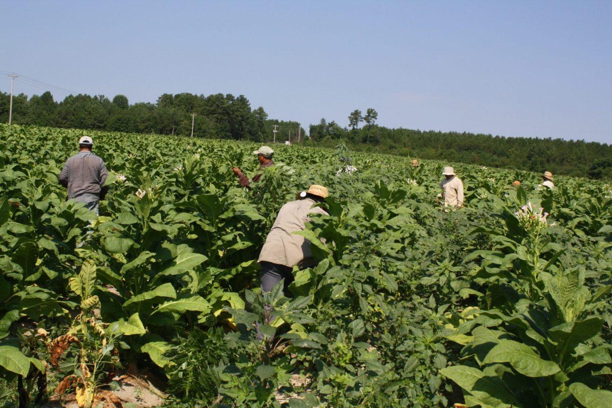 trabajadores agrícolas vulnerables