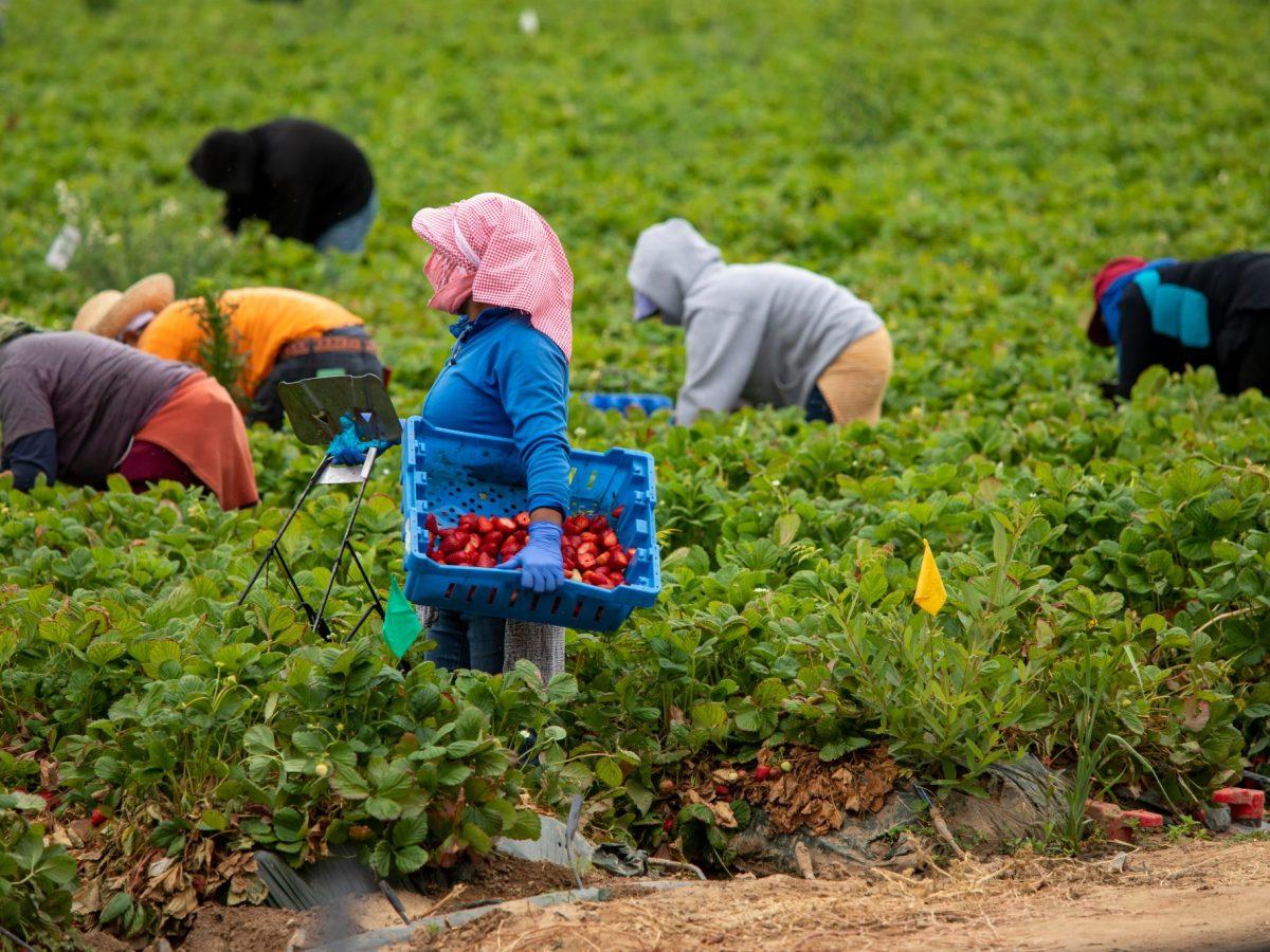 trabajadores rurales migrantes evitan congelamiento de salarios