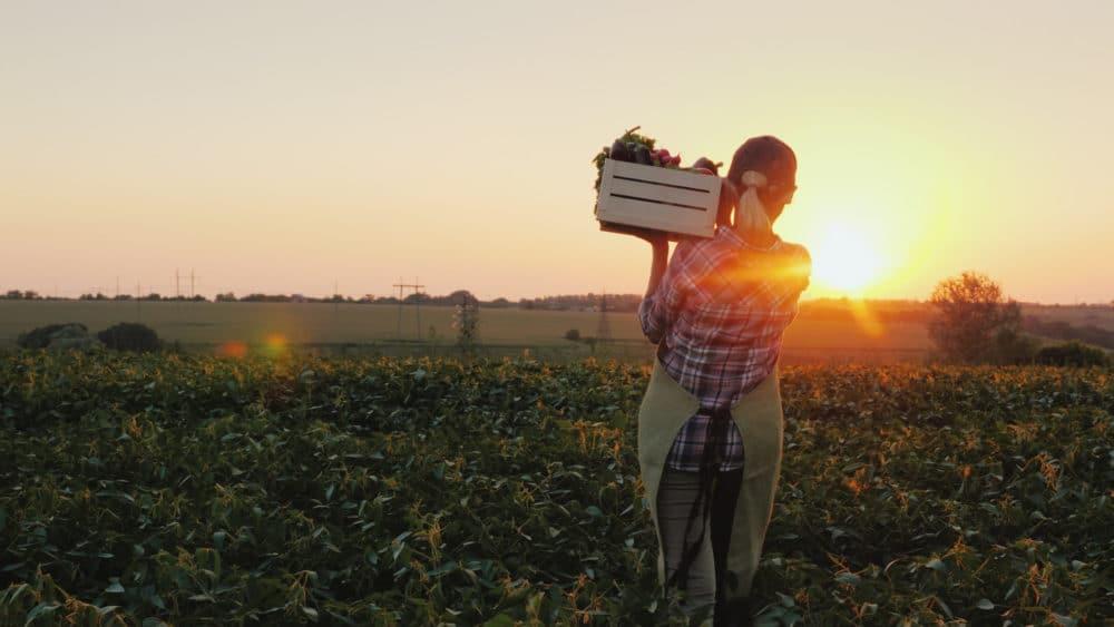 Trata laboral en agricultura, visa H-2A