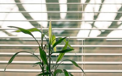 Top Blinds Companies