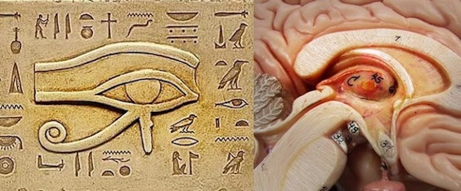 The Pineal Gland: One of the biggest secrets withheld from humanity