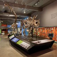 Focus Lighting: Entrance of the Dinosaur Hall