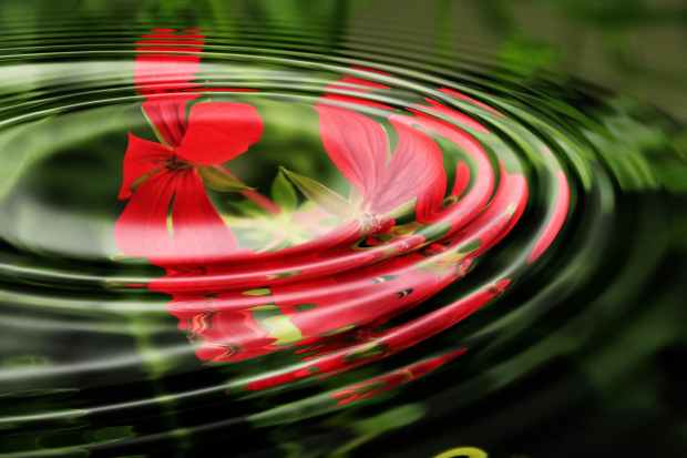 geranium-wave-water-rings-55813.jpeg