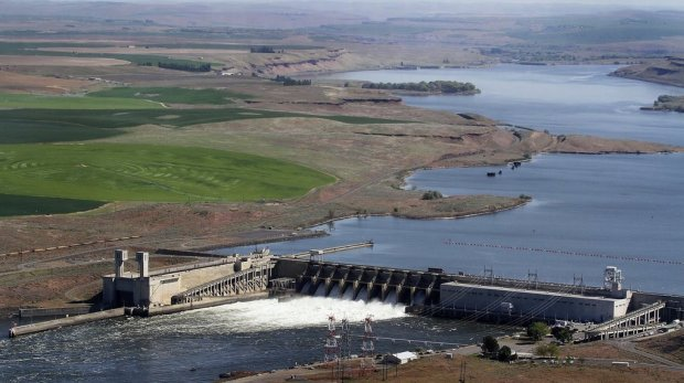 Orca survival may be impossible without Lower Snake River dam removal, scientists say