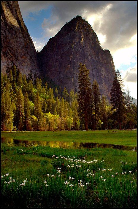 http://enlightphoto.com/photo-info/vly22031-spring-wildflowers-yosemite-valley-photo.html