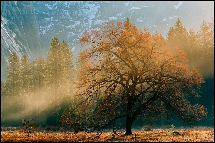 http://enlightphoto.com/photo-info/vly22437-tree-and-morning-mist-yosemite-valley-photo.html