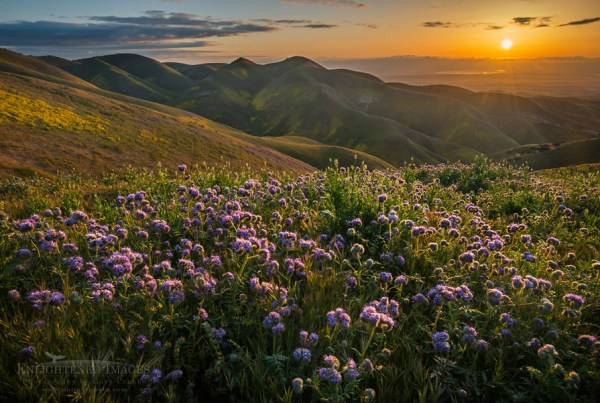 Photo: Sunrise over wildflowers in spring, Carrizo Plain National Monument, California