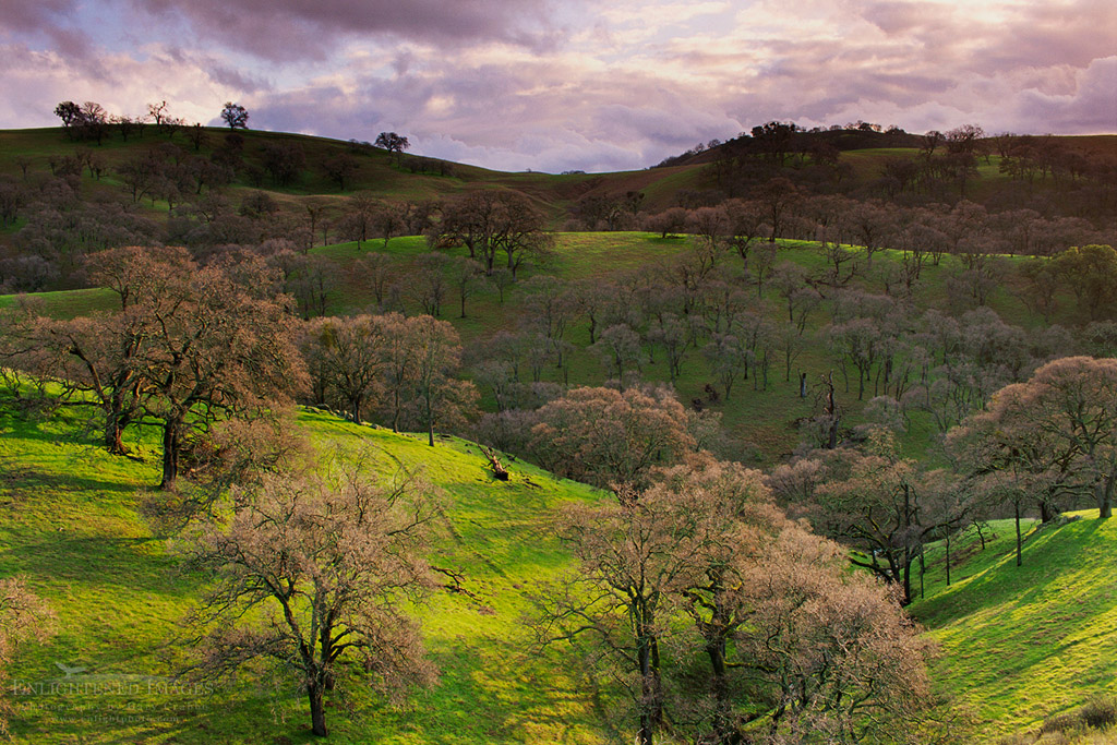 Photo: Oak trees, green grass, and sunlight, Mt. Diablo State Park, Contra Costa County, California