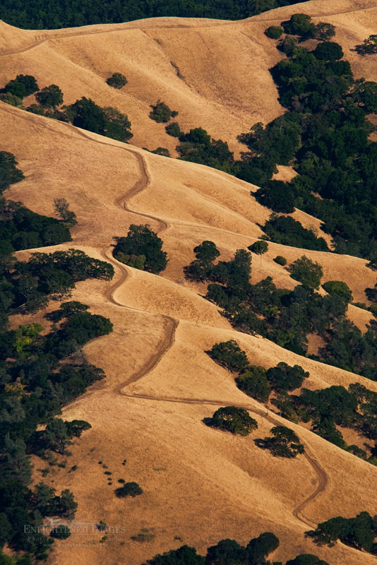 Photo: Oak and grass covered hills in summer along the slopes of Mount Diablo State Park, California