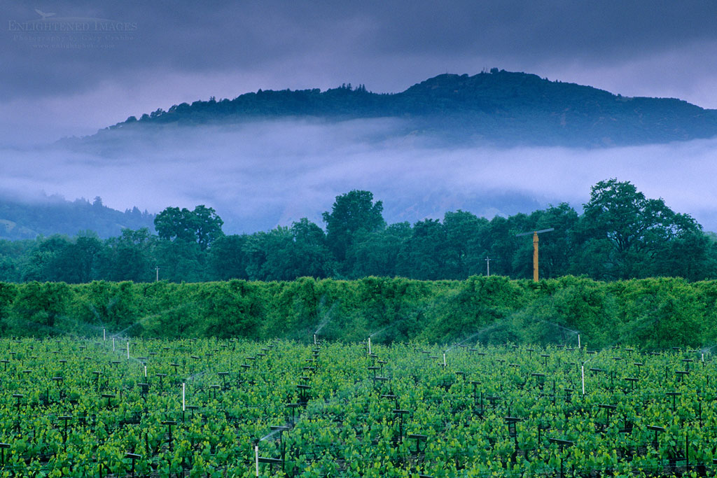 Photo: Stormy spring morning over vineyard, East Side Road, near Ukiah, Mendocino County, California