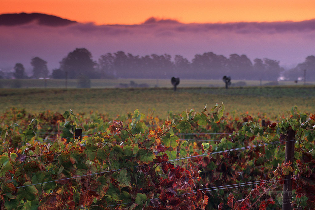 Photo: Sunrise in the Carneros Region, Napa Valley, Napa County, California