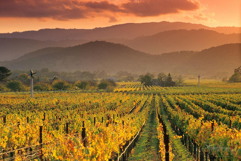 Photo: Sunset light over vineyards in fall along the Silverado Trail near Oakville, Napa County, California