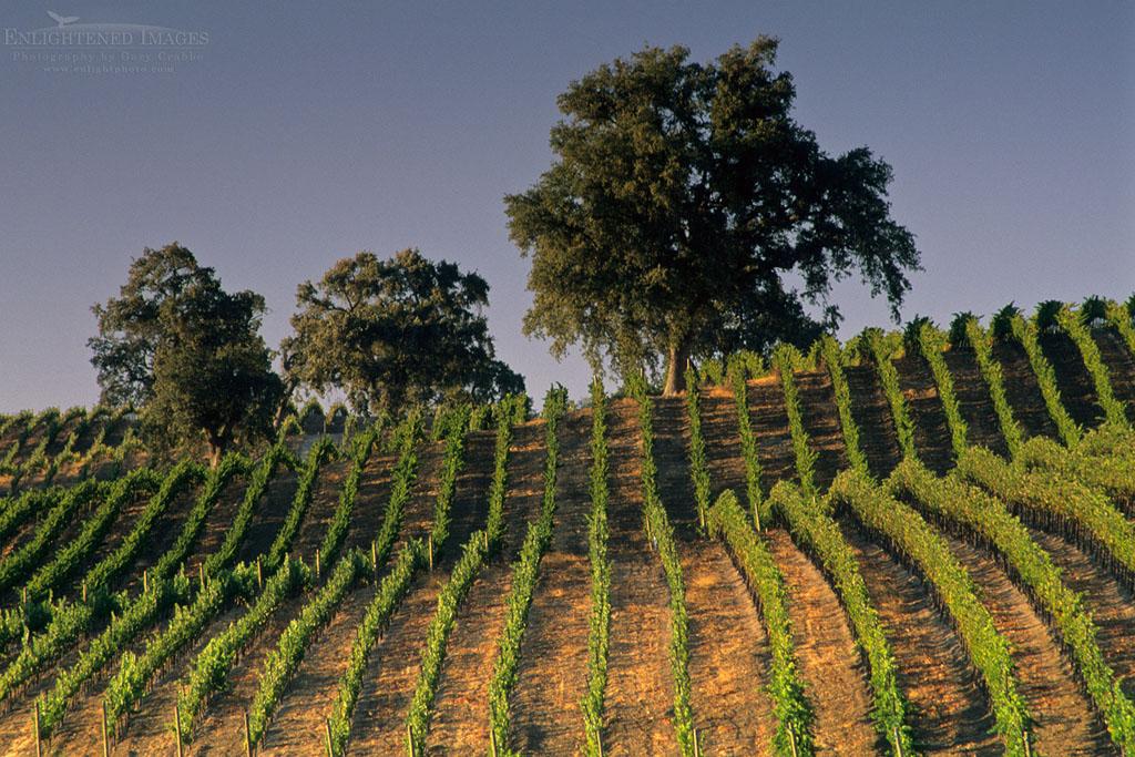 Photo: Vineyards at Summerwood Winery, Paso Robles, San Luis Obispo County, California