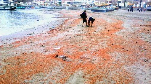 Dramática escena, ¿qué pasa en nuestro mar?