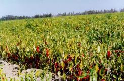 Los agricultores de Arequipa tienen una gran oportunidad para concretar negocios de exportación hacia Venezuela