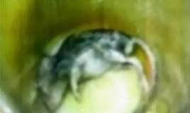 FOTO: Encuentran ratón en desayuno Qali Warma