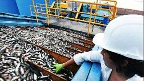 Exportadores y productos peruanos deben ofrecer la anchoveta con valor agregado para satisfacer al cliente brasileño.