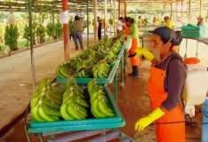Un acuerdo comercial entre Perú y Turquía, incrementaría principalmente las exportaciones en el subsector agro.