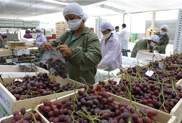 Las uvas frescas peruanas es el principal producto agropecuario enviado a China.