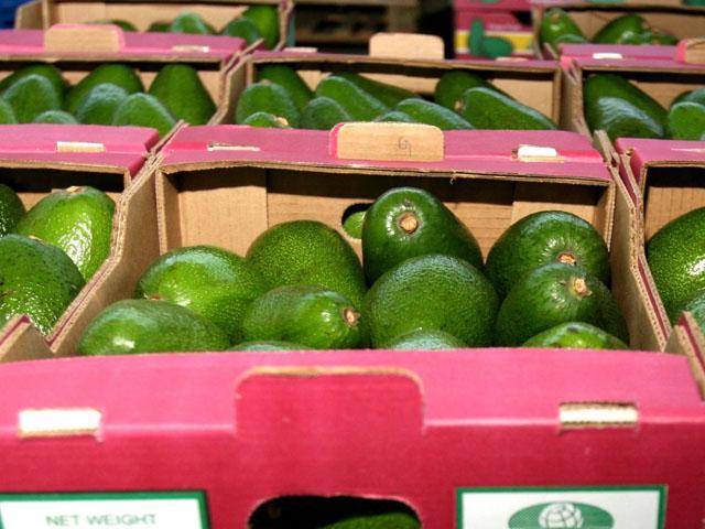 Algunos de los productos no tradicionales del sector agrario (como el caso de la palta) incrementaron sus volúmenes de venta.