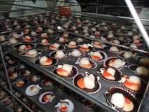 Las exportaciones de conchas de abanico duplicaron sus envíos al exterior a noviembre del año pasado.
