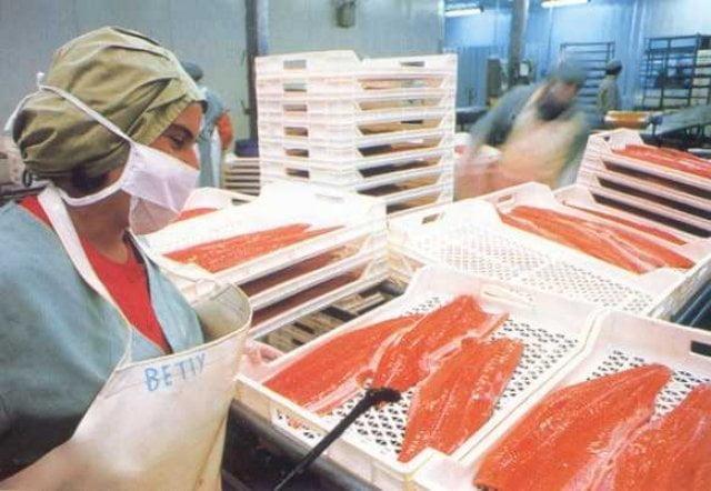 El filete de trucha congelada nacional quedó apto para ser exportada al Brasil.