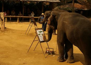 [VIDEOS] Insólito: Un elefante y un perro pintan lienzos con un pincel