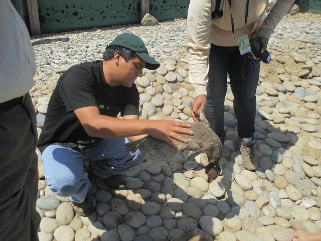 FOTO RPP / Revelan que cinco pingüinos murieron por mordedura de perros en Eten