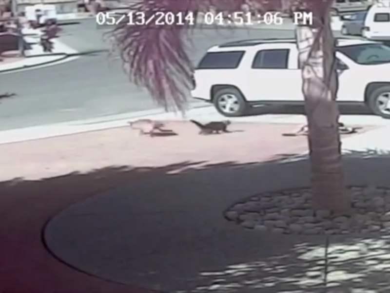 [VIDEO] Impactante: Gato salva a niño del ataque de un perro ¿mejor amigo?