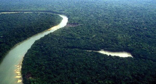 CropLife anuncia '0 Carbono' proyecto de reforestación para Latinoamérica