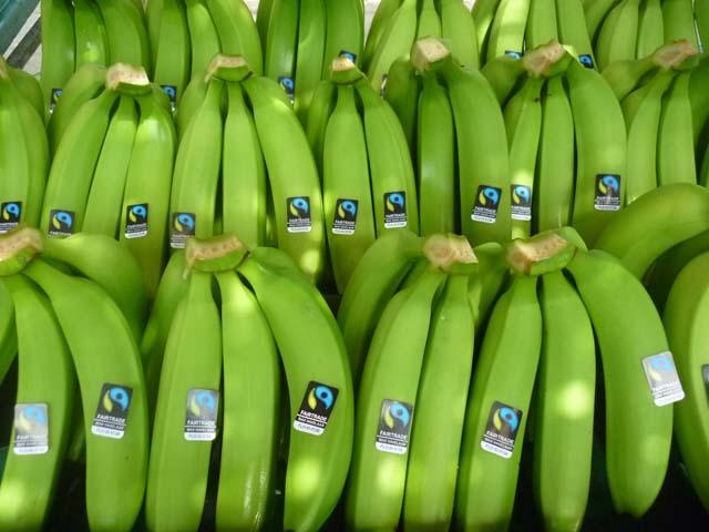 El 95% del banano orgánico que exportaría Cepibo se direccionaría a Europa y el saldo restante a Estados Unidos.