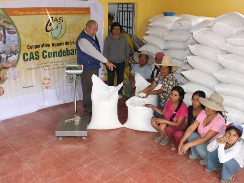 Productores cajamarquinos de frijol alubia posan con el producto antes de ser exportado hacia España y Alemania.