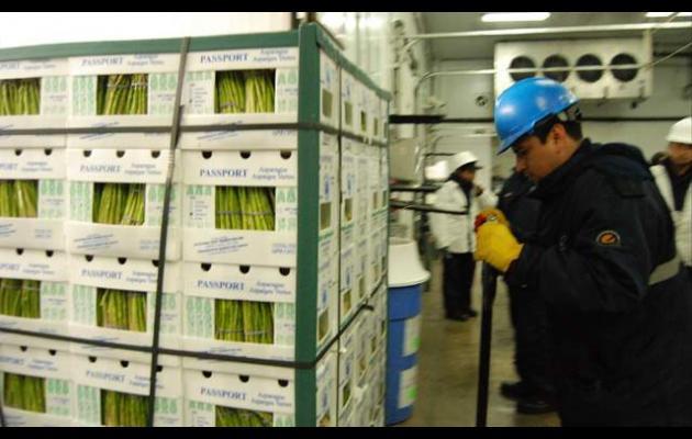 Entre enero y noviembre se exportaron más de 100 millones de kilos de espárragos frescos.