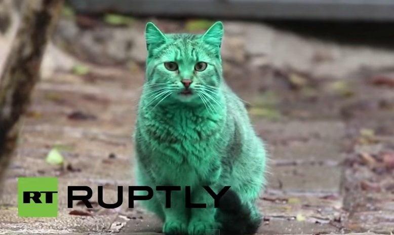 [VIDEO] El gato color verde esmeralda que sorprendió a Bulgaria