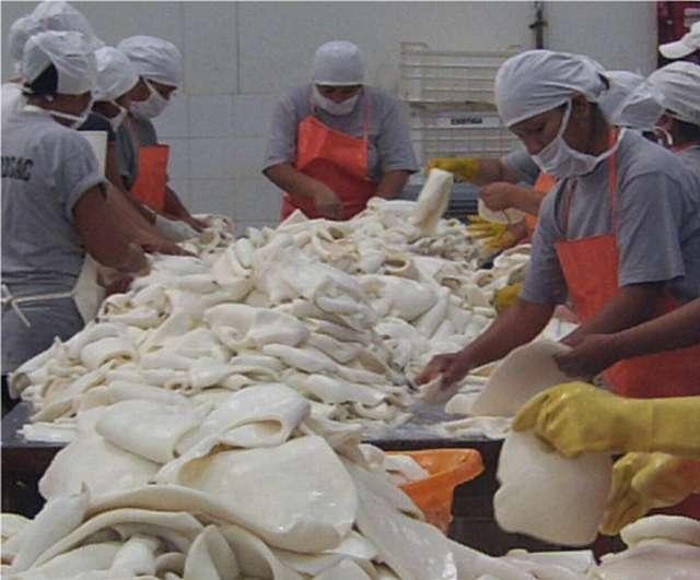 La pota peruana se exporta en diferentes presentaciones.