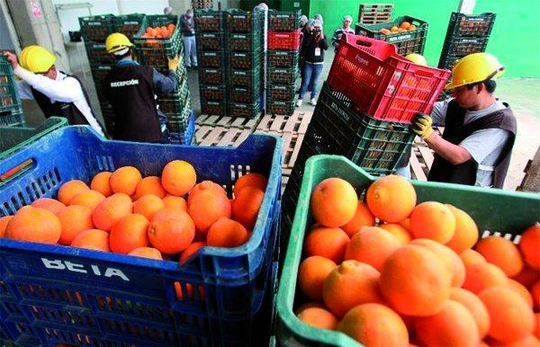 Las frutas y hortalizas fueron los productos agrarios más demando por los diferentes mercados internacionales.