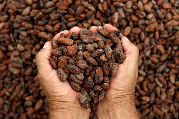 El cacao en grano es un producto con gran potencial para ser exportado a la India.