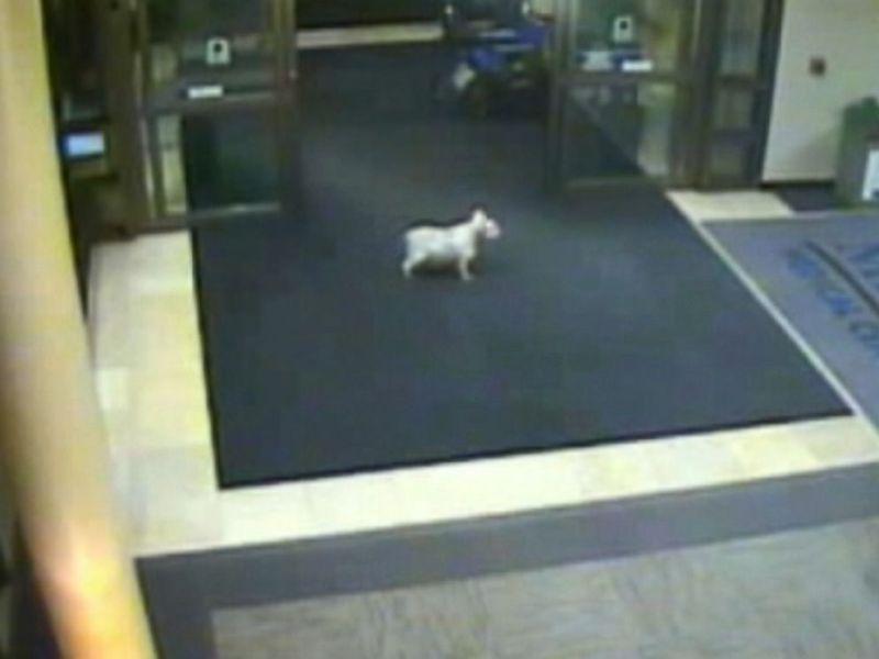 Increíble: Perrito aparece en hospital donde su dueña lucha contra el cáncer