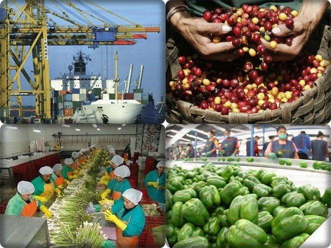 Dinamismo del subsector agro permitieron que las exportaciones lambayecanas aumenten en el 2014.