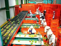 Los productos agrarios nacionales con valor agregado sumaron ventas al exterior por US$ 770 millones entre enero y febrero.